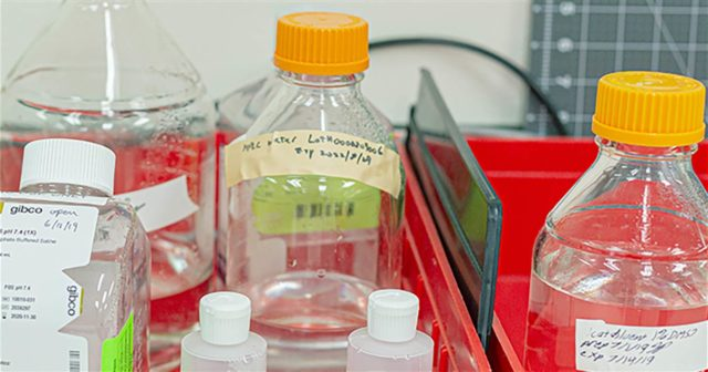 labelled plastic bottles in lab